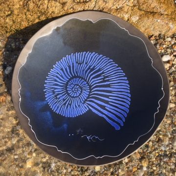 Black nautilus web